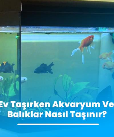 Ev Taşırken Akvaryum Ve Balıklar Nasıl Taşınır?